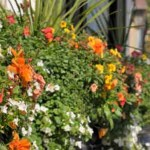 springflowerbox